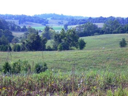 farm-pic.jpg